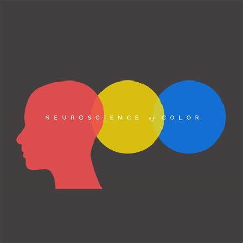 canva color palette ideas the fascinating neuroscience of color and what it means