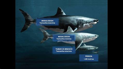 blue whale vs whale shark blue whale vs whale shark
