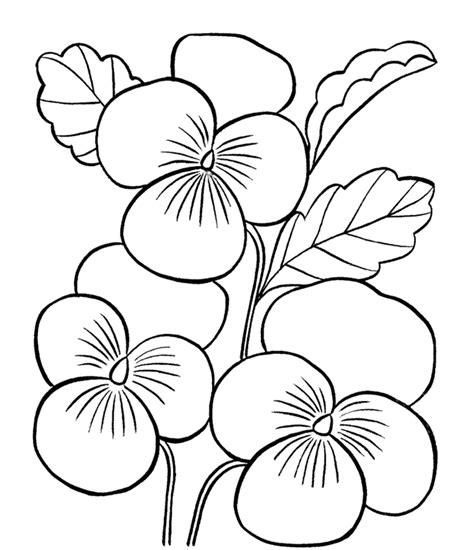 coloring pictures of beautiful flowers more unique australia animals httpaustralian animalsnet