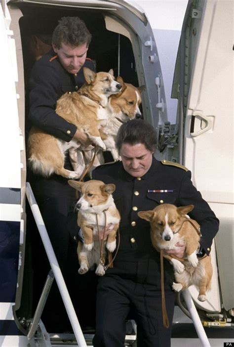 queen elizabeth s corgis queen elizabeth ii corgis and their handlers fun