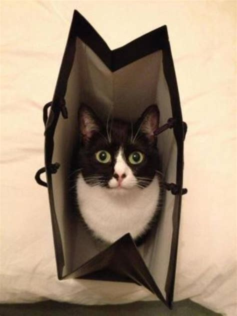 Cat Out Of by Let The Cat Out Of The Bag Ayurveda