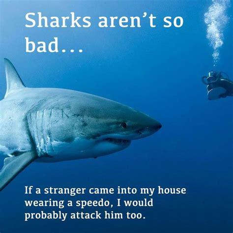 baby shark jokes 51 best shark jokes images on pinterest funny stuff