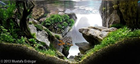 Most Beautiful Aquascapes by A Collection Of Beautiful Aquascapes Kristelvdakker