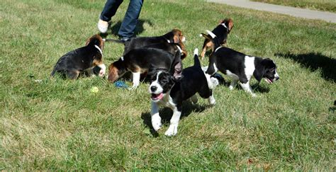 how to raise two puppies successfully 7 bundles of scientific test puppies prove ivf can work in dogs wunc