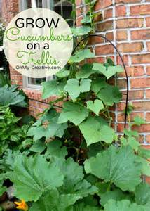 grow cucumbers on trellis small space gardening grow cucumbers on a trellis