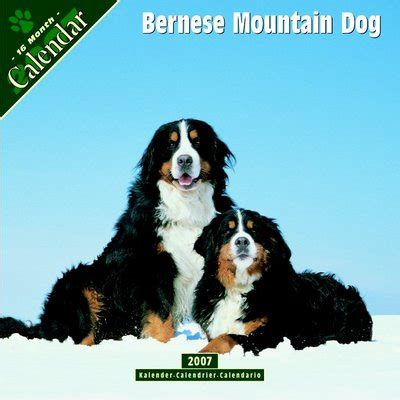 bernese mountain price bernese mountain 2006 calendar review compare prices buy