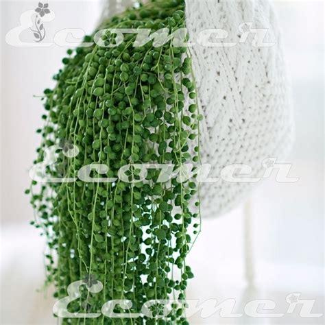 piante pendenti da interno piante pendenti da gerani pendenti tirolesi with piante