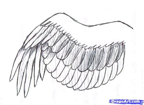 Drawing Wings by How To Draw A Simple Bird Wing Step By Step Birds