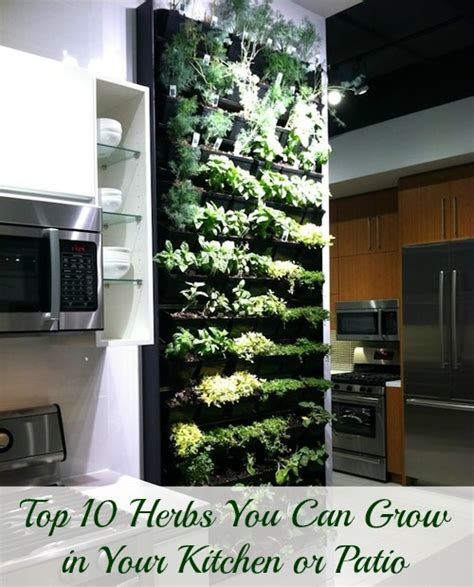 how to grow fresh herbs in your kitchen top 10 herbs you can grow in your kitchen or patio s magazine by