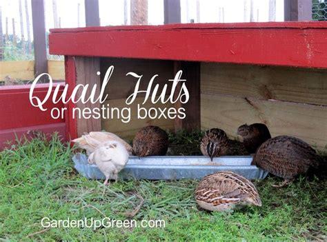 Backyard Chickens Quail 209 Best Raising Birds Images On Raising