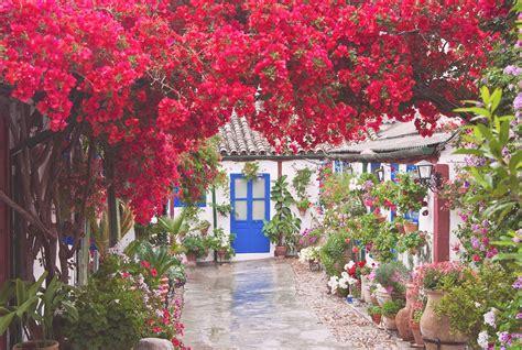 patios cordobeses patio cordobes modern patio outdoor