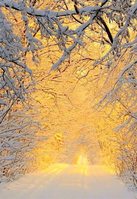 Winter Yellow 446 best ideas about zero degrees on winter