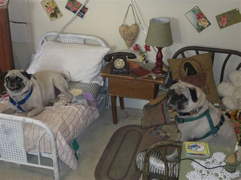 dog not allowed in bedroom dog not allowed in bedroom 28 images i m not much for the yellow