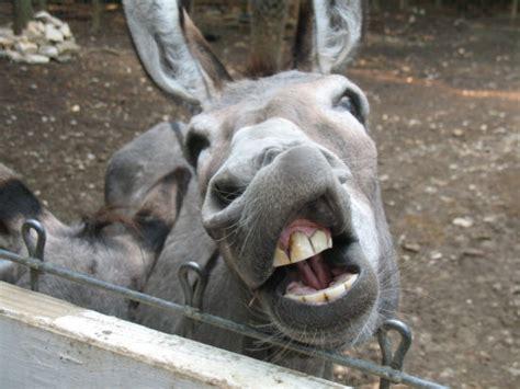 shrek eek oyunlar shrek eek oyunu burro donkey outdoors outside wildlife nature animal