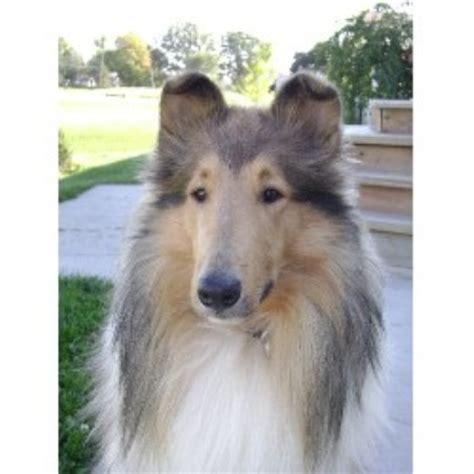 free puppies toledo ohio breeders located in rhode island breeds picture