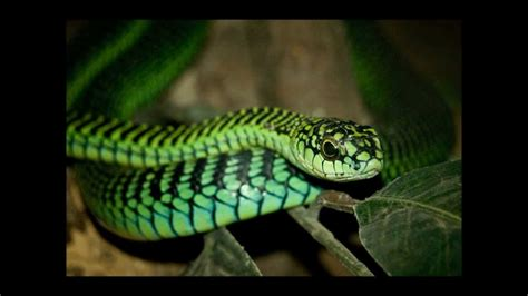 top 25 most dangerous animals in the world pouted online the 25 most dangerous animals in the world doovi