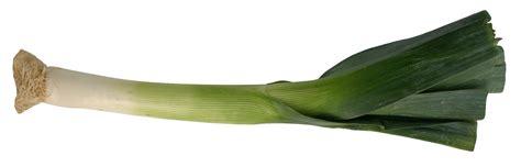 Image Of A Leek