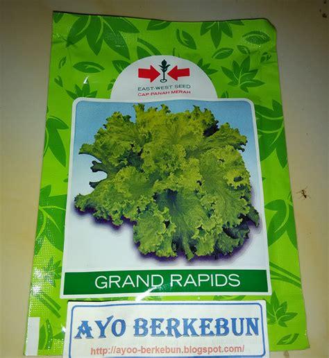 Benihbibit Selada Grand Rapids 15gr Cap Panah Merah benih selada hijau grand rapids cap panah merah ayo berkebun