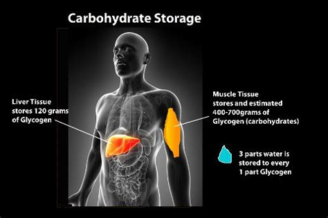 carbohydrates energy storage diet and weight loss principles