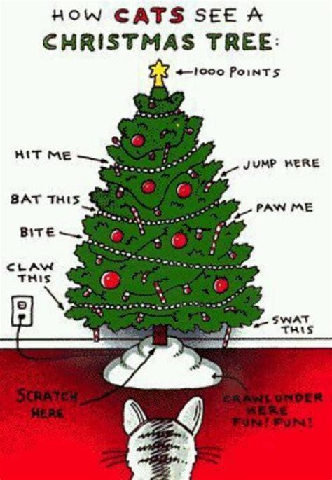 Cat Christmas Tree Meme - how cats see a christmas tree lol humor fun pinterest