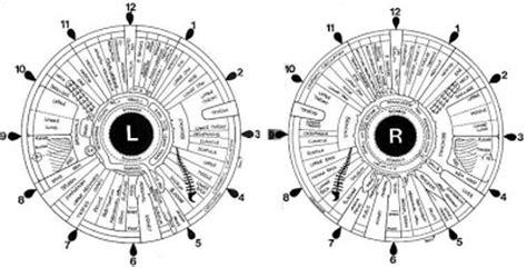 printable iridology eye chart cutouts shrek printable easter bingo race car