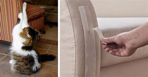 cat keeps scratching do you own a cat here are 11 useful tricks to prevent