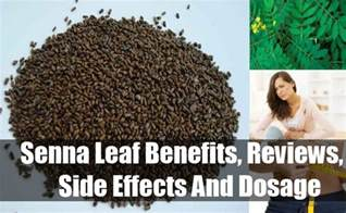 Galerry Sassafras Leaf Benefits Reviews Side Effects and Dosage Vitamins