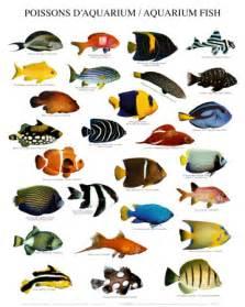 types of aquarium fish saltwater aquarium tips fish for the saltwater aquarium