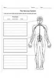 english worksheet the nervous system