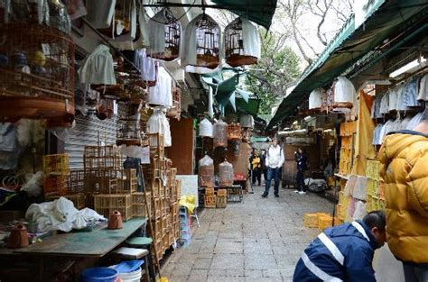 bird market picture of bird street hong kong tripadvisor