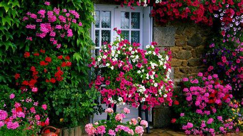 10 best low maintenance flowers for effortless garden