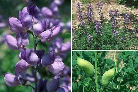 fiori di bach e menopausa princeps prodotti erboristici e fiori di bach