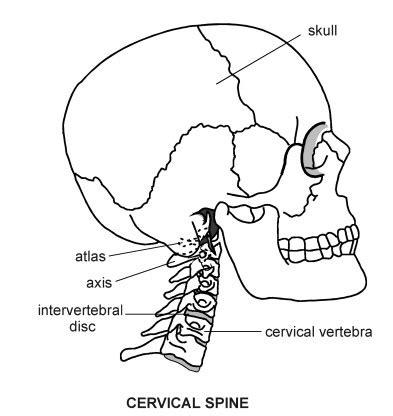 diagram of cervical spine cervical spine diagram patient
