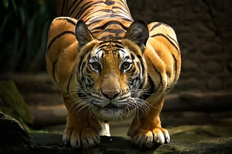 imagenes interesantes de animales datos curiosos e interesantes sobre animales tigres