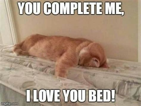 I Love My Bed Meme - cat bed meme geek pinterest