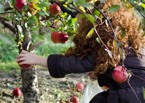 Was Kostet Ein Apfelbaum 2715 preis vom apfelbaum 187 mit diesen kosten k 246 nnen sie rechnen