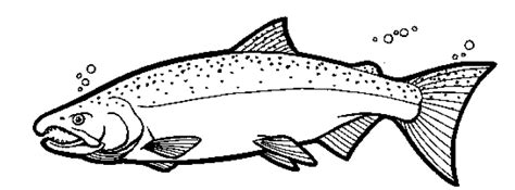 pin king salmon colouring pages on pinterest