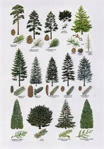 types of trees 8 proximity the elements different types of trees are placed close to one another but with