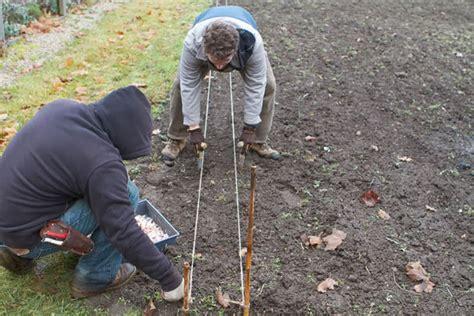 plantadores de hortalizas c 243 mo plantar ajo en nuestra huerta