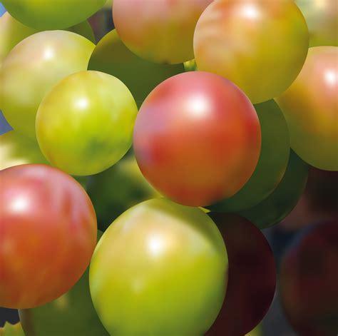 fruit qualifications studio institut luc