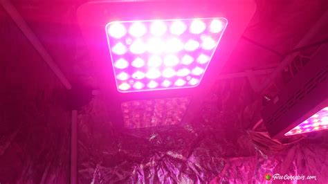 growing with led lights forum led grow lights forums decoratingspecial com