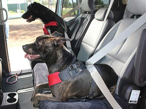 best car harness safety harness for dogs in cars best car harness