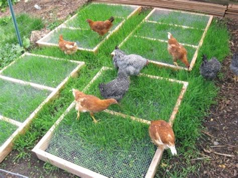 Chickens For Backyards by How To Build Grazing Frames For Your Backyard Chickens