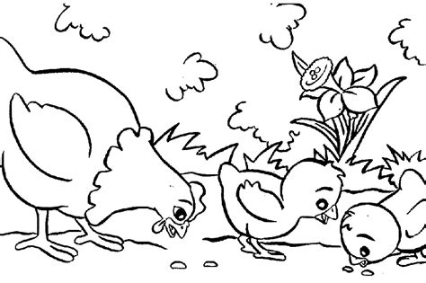 little red hen coloring page coloring home