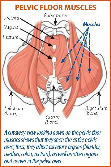 Pelvic Floor Problems by Pelvic Floor Rehabilitation Can Reduce Pelvic As