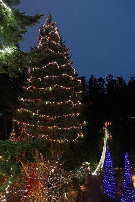 world s largest living christmas tree mommomonthego com
