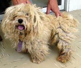 a dogs bad hair day the pet product guru