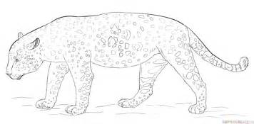 How To Draw A Jaguar How To Draw A Jaguar Step By Step Drawing Tutorials