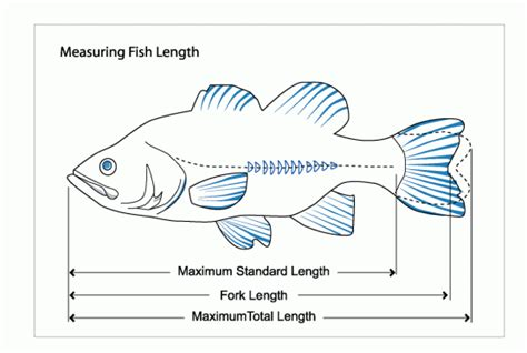 length of 3di measures of fish length