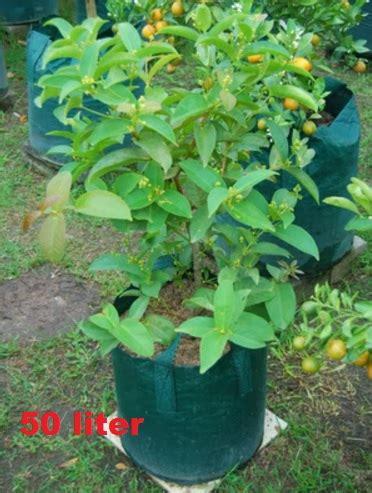 planter bag hijau 50 liter bibitbunga
